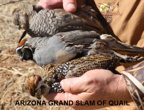 arizona hat trick grand slam of quail