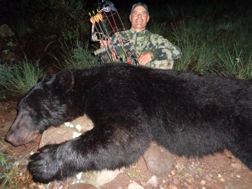 arizona archery bear hunting bow