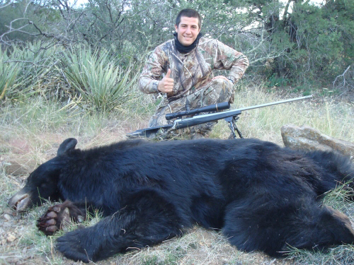 arizona black bear hunting