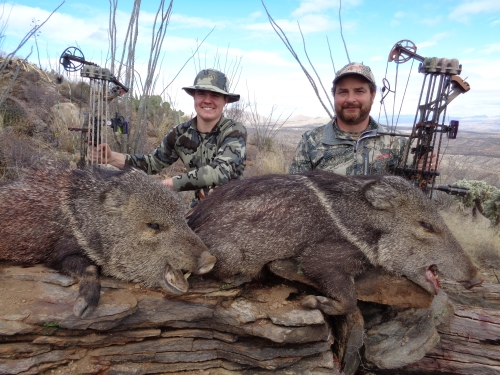 javelina hunting with bow