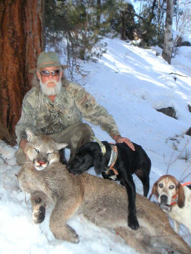 arizona mountain lion hunt
