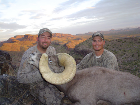 Giant Nelson Desert Bighorn Sheep