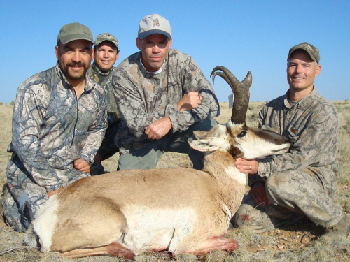 arizona pronghorn antelope buck