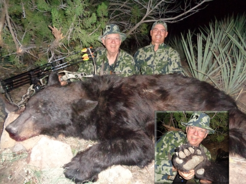 arizona archery bear hunt bow hunting for bear guides