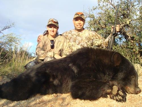 Arizona Black Bear