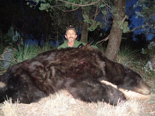 arizona black bear hunts hunting outfitters guides