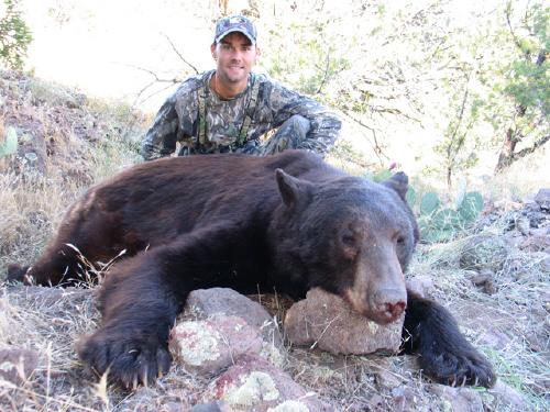 Large Arizona Bear
