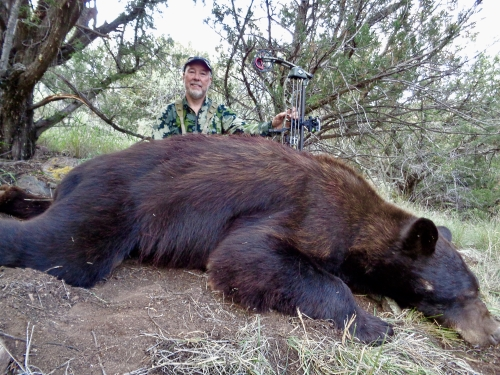 archery bear hunting in arizona outfitters guides