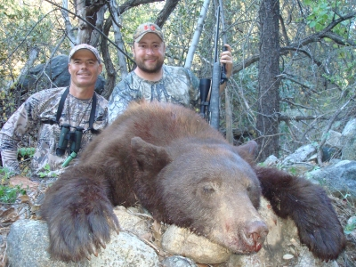 arizona bear hunt guides outfitters
