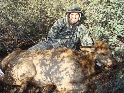 arizona cow elk hunting