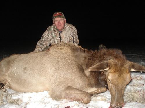 arizona cow elk antlerless elk