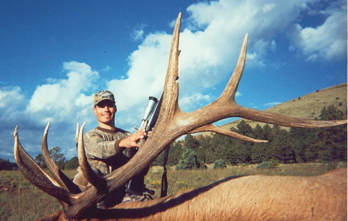 arizona bull elk hunt guides outfitter